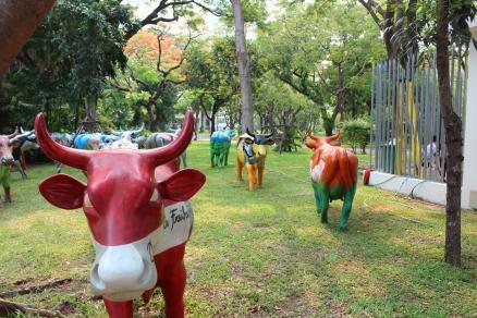 cows.J 1PG